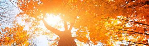 Autumn-trees-charity-seminars-B1